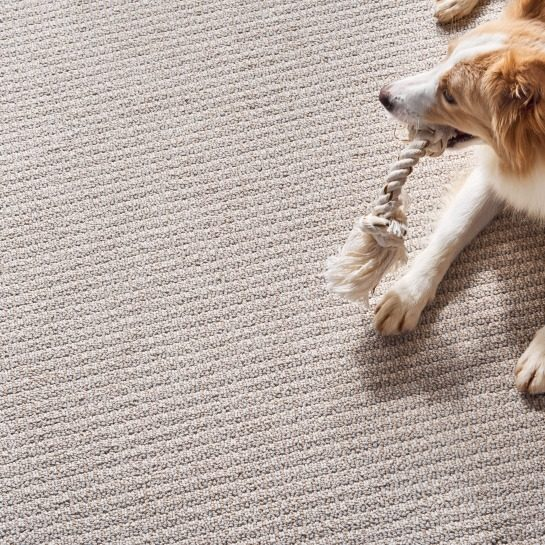 Carpet Care | Georgia Flooring